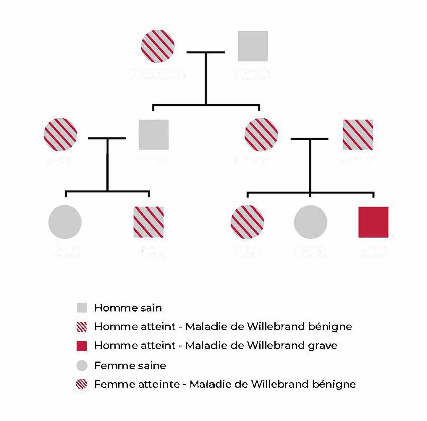 Arbre généalogique de transmission de la maladie de Willebrand